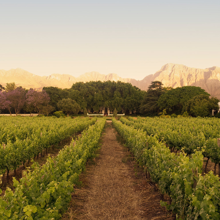 Learn To Harvest Like An Expert At Nederburg